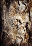 Abstract structures on an old tree trunk Stock Photo