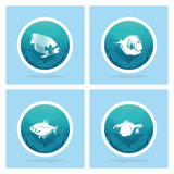 Abstract Styling Fish Label Isolated On Background Stock Images