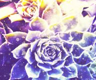 Abstract Succulent Illustration. Grunge stylized illustration of a colorful succulent, photo manipulation Royalty Free Stock Photography