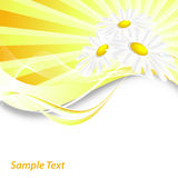 Abstract summer background. With chamomiles and copy space royalty free illustration