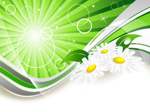 Abstract summer background. With chamomiles and copy space vector illustration