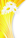 Abstract summer background. With lines and chamomiles royalty free illustration