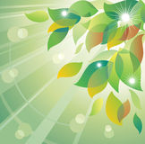 Abstract summer background. Stock Photo