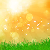 Summer Nature Chill. Abstract summer background with flying birds and bokeh lights Royalty Free Stock Photo