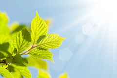Abstract summer background with green leaves Royalty Free Stock Images