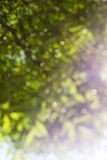 Abstract summer background. Abstract spring and summer background Stock Photo