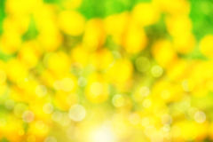 Abstract summer background with sunlight Royalty Free Stock Images