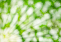 Abstract summer background with sunlight Stock Photography