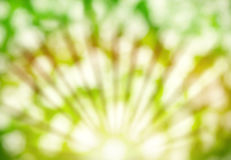 Abstract summer background with sunlight Royalty Free Stock Image