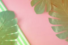 Abstract summer background. Template for business, education or fashion concept. Tropical leaves Monstera on pink background a stock images