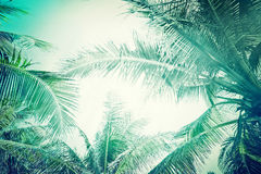 Abstract summer background with tropical palm tree. Abstract summer background in vintage style with tropical palm tree leaves at sunny day stock photos