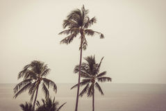 Free Abstract Summer Background With Tropical Palm Tree Stock Photos - 62378973
