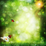 Abstract summer backgrounds Royalty Free Stock Photos