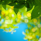 Abstract summer backgrounds. With green foliage and morning dew Royalty Free Stock Photos