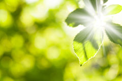 Abstract summer bokeh with green leaves Royalty Free Stock Image