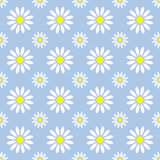 Abstract summer camomile seamless pattern Royalty Free Stock Photo