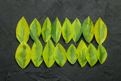 Abstract summer composition of beautiful green leaves on a concrete black background. leaf pattern. top view royalty free stock photos