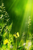 Abstract Summer Floral Green Nature Background Royalty Free Stock Images