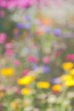 Abstract Summer Nature Background -  Stock Photos Stock Photos