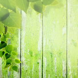 Abstract summer and spring backgrounds. With foliage and wooden fence stock photography
