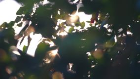 Abstract Sun Glare with green leaves stock video