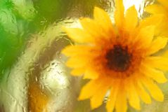 Abstract Sunflower Stock Image