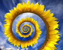 Abstract sunflower spiral Royalty Free Stock Image