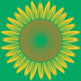 Abstract sunflower vector Royalty Free Stock Photos