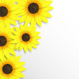 Abstract sunflowers background. Beautiful flowers background for your business Stock Photography