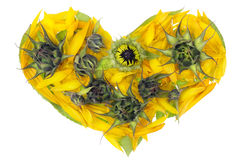 Abstract sunflowers heart Stock Photo
