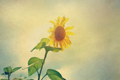 Abstract sunflowers in the sunshine on paper grain Royalty Free Stock Image