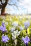 Abstract sunny beautiful Spring background Royalty Free Stock Images