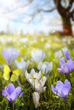 Abstract sunny Spring background Stock Photos