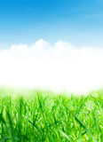 Abstract sunny spring background Royalty Free Stock Image