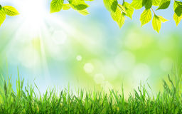 Abstract sunny spring background Stock Image
