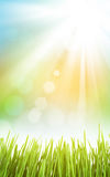 Abstract sunny spring background with grass. And sky Stock Photography