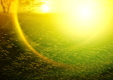 Abstract Sunset. With wheat grass Royalty Free Stock Photo