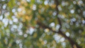 Abstract sunshine bokeh Stock Image