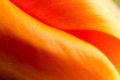 Abstract supermacro picture of garden tulip Royalty Free Stock Photo