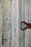 Abstract surface: fragment of old wooden door Royalty Free Stock Photography