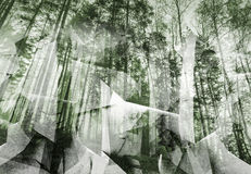 Abstract surreal forest background. Green toned collage Royalty Free Stock Image