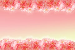 Abstract sweet pink sakura frame Royalty Free Stock Photos