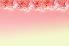 Abstract sweet pink sakura frame Stock Photos