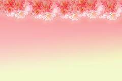 Abstract sweet pink sakura frame Stock Photos