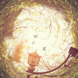 abstract swirled background of antique street lantern among tree branches and butterflies at sunset light Stock Images