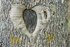 Abstract symbol of love and fidelity on a tree Royalty Free Stock Photo