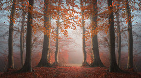 Abstract symmetry in foggy forest Royalty Free Stock Image