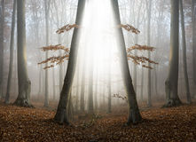 Abstract symmetry and magical light in foggy forest Stock Images