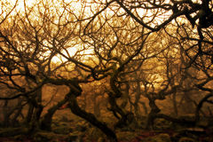 Abstract view of Padley Goege Ancient Forest Royalty Free Stock Photos