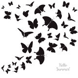 Abstract Template with Butterflies for Fashion and Postcard. Stock Photos